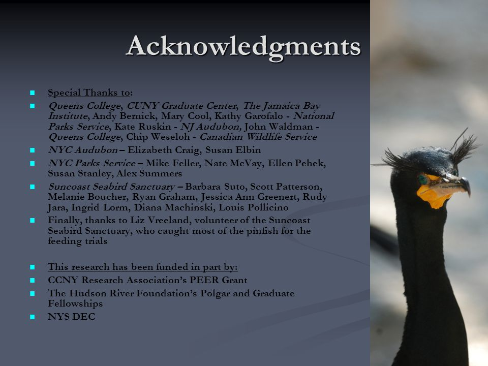 Acknowledgments Special Thanks to: Queens College, CUNY Graduate Center, The Jamaica Bay Institute, Andy Bernick, Mary Cool, Kathy Garofalo - National Parks Service, Kate Ruskin - NJ Audubon, John Waldman - Queens College, Chip Weseloh - Canadian Wildlife Service NYC Audubon – Elizabeth Craig, Susan Elbin NYC Parks Service – Mike Feller, Nate McVay, Ellen Pehek, Susan Stanley, Alex Summers Suncoast Seabird Sanctuary – Barbara Suto, Scott Patterson, Melanie Boucher, Ryan Graham, Jessica Ann Greenert, Rudy Jara, Ingrid Lorm, Diana Machinski, Louis Pollicino Finally, thanks to Liz Vreeland, volunteer of the Suncoast Seabird Sanctuary, who caught most of the pinfish for the feeding trials This research has been funded in part by: CCNY Research Association's PEER Grant The Hudson River Foundation's Polgar and Graduate Fellowships NYS DEC