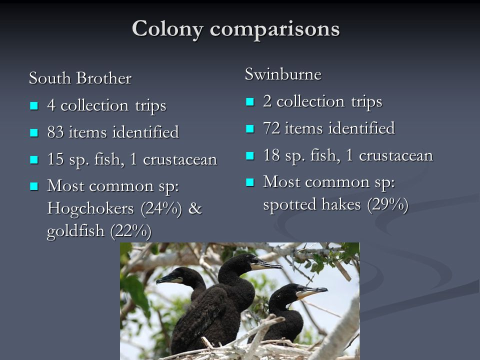 Colony comparisons South Brother 4 collection trips 4 collection trips 83 items identified 83 items identified 15 sp. fish, 1 crustacean 15 sp. fish,