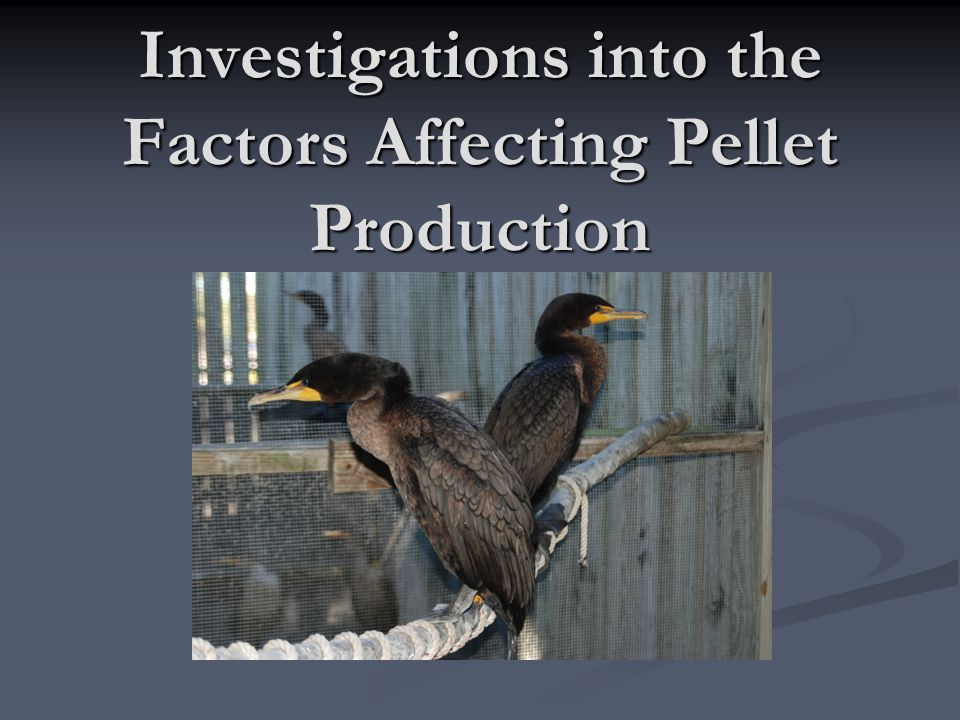 Investigations into the Factors Affecting Pellet Production