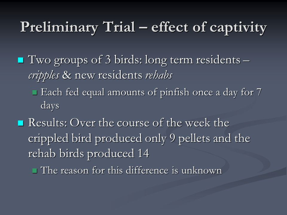 Preliminary Trial – effect of captivity Two groups of 3 birds: long term residents – cripples & new residents rehabs Two groups of 3 birds: long term residents – cripples & new residents rehabs Each fed equal amounts of pinfish once a day for 7 days Each fed equal amounts of pinfish once a day for 7 days Results: Over the course of the week the crippled bird produced only 9 pellets and the rehab birds produced 14 Results: Over the course of the week the crippled bird produced only 9 pellets and the rehab birds produced 14 The reason for this difference is unknown The reason for this difference is unknown