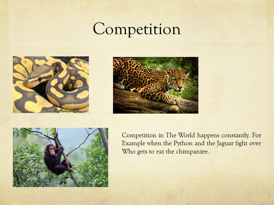 Competition Competition in The World happens constantly. For Example when the Python and the Jaguar fight over Who gets to eat the chimpanzee.