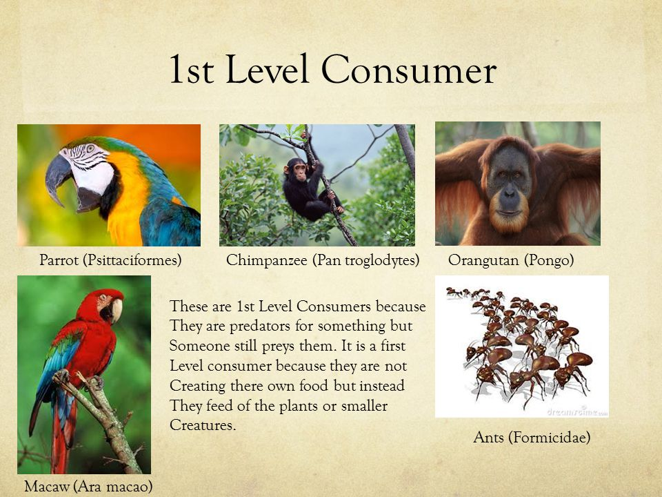 1st Level Consumer These are 1st Level Consumers because They are predators for something but Someone still preys them.