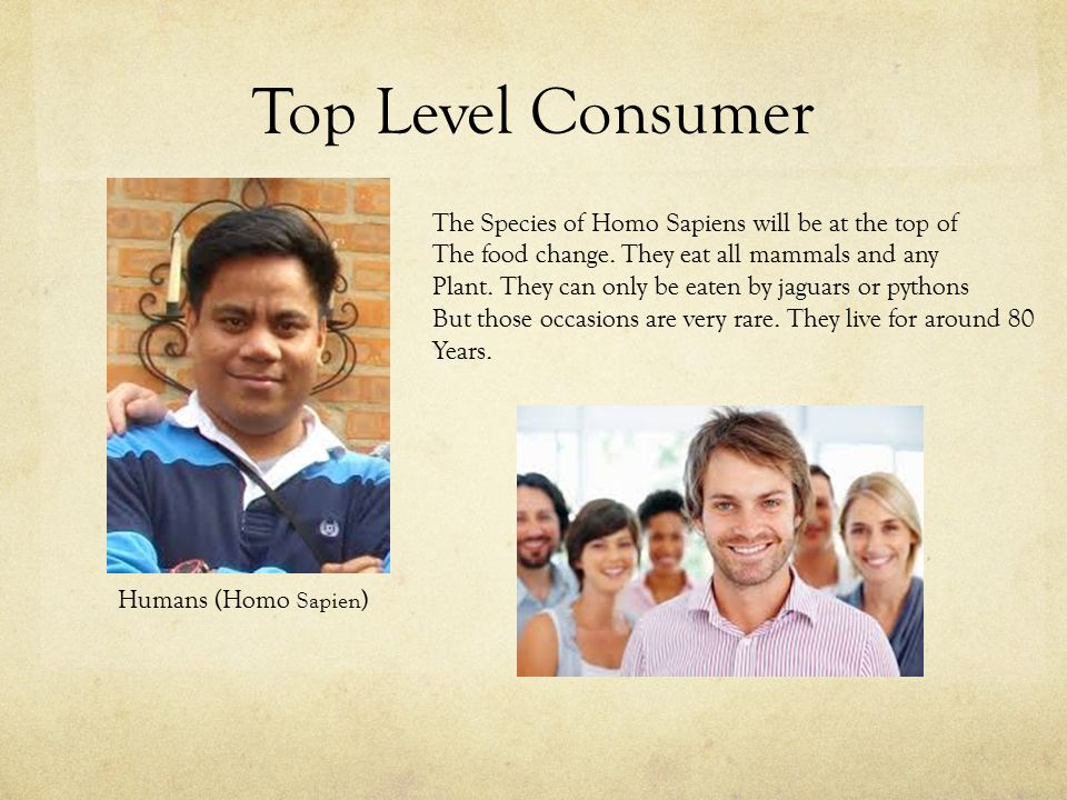 Top Level Consumer Humans (Homo Sapien ) The Species of Homo Sapiens will be at the top of The food change.