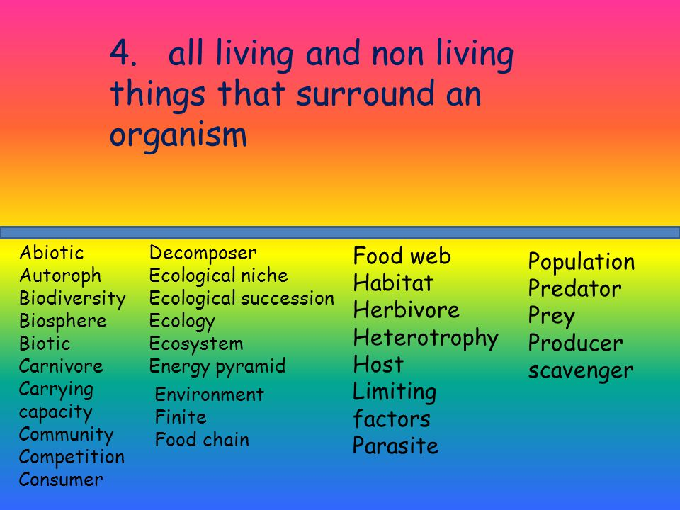 4. all living and non living things that surround an organism Decomposer Ecological niche Ecological succession Ecology Ecosystem Energy pyramid Abiot