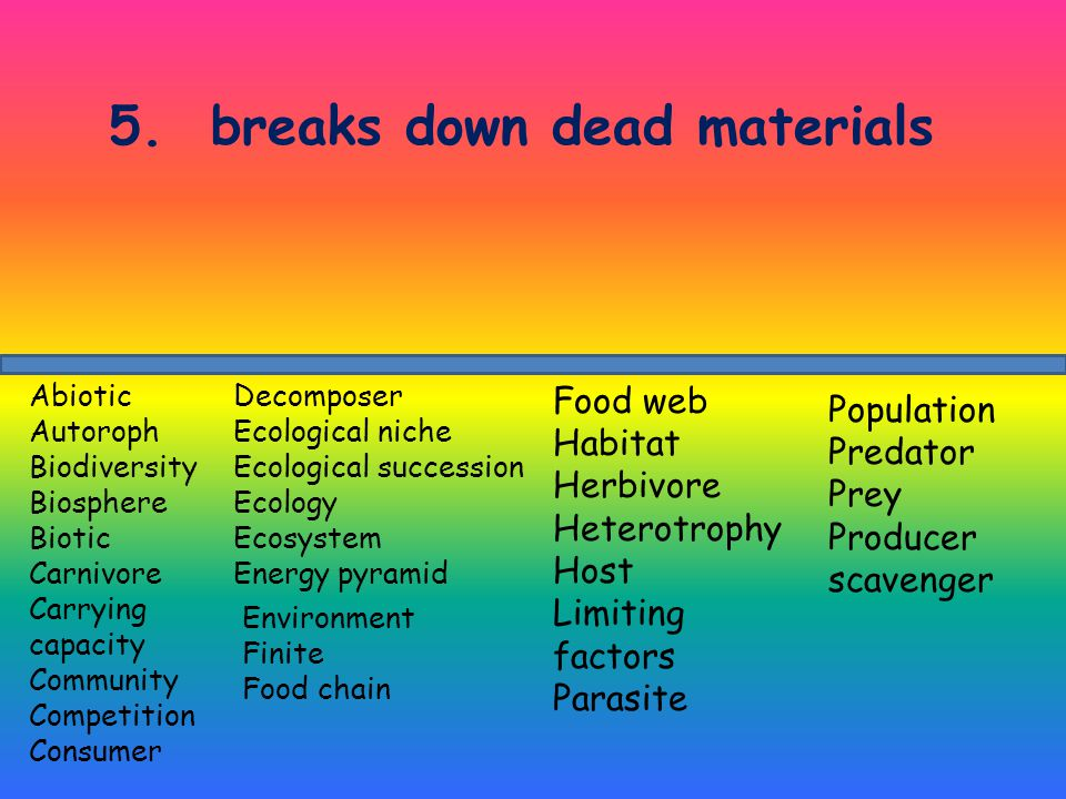 5. breaks down dead materials Decomposer Ecological niche Ecological succession Ecology Ecosystem Energy pyramid Abiotic Autoroph Biodiversity Biosphe
