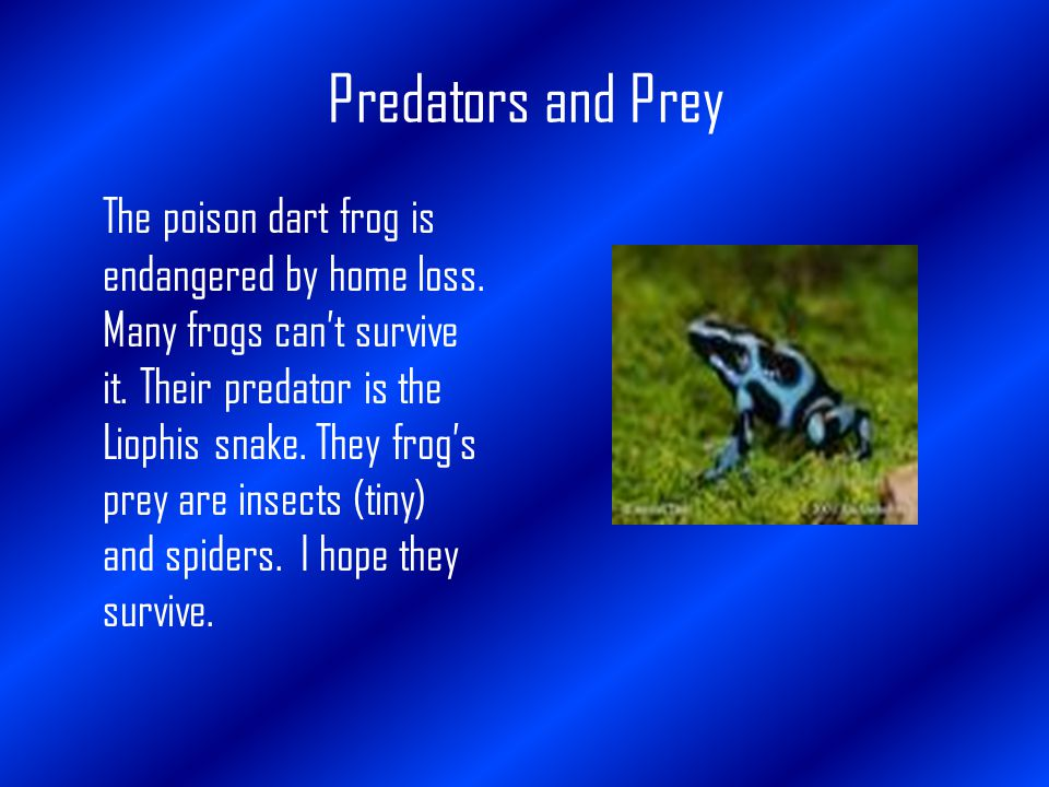Predators and Prey The poison dart frog is endangered by home loss.