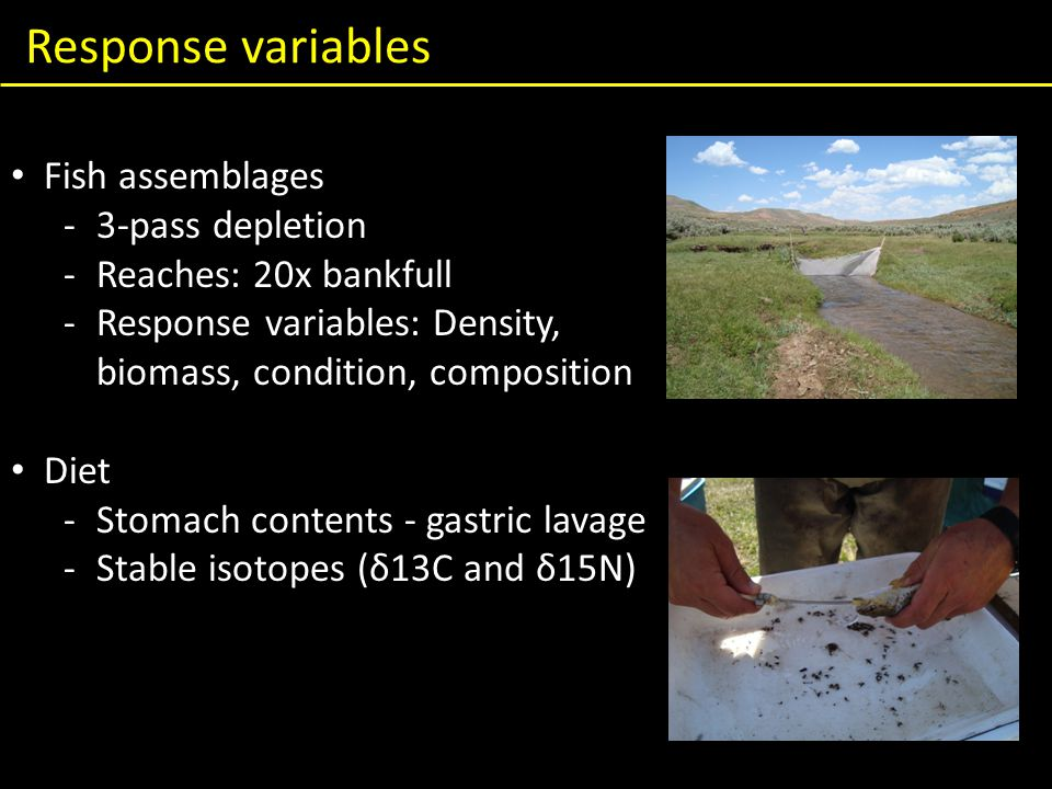 Response variables Fish assemblages -3-pass depletion -Reaches: 20x bankfull -Response variables: Density, biomass, condition, composition Diet -Stomach contents - gastric lavage -Stable isotopes (δ13C and δ15N)