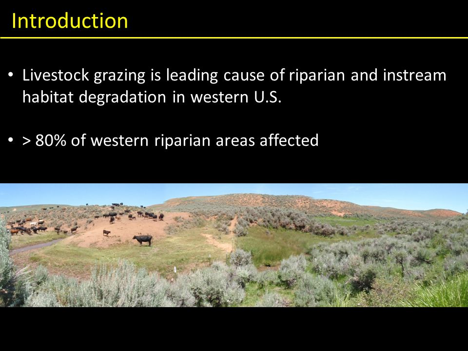 Introduction Livestock grazing is leading cause of riparian and instream habitat degradation in western U.S.