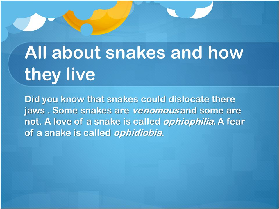 All about snakes and how they live Did you know that snakes could dislocate there jaws. Some snakes are venomous and some are not. A love of a snake i