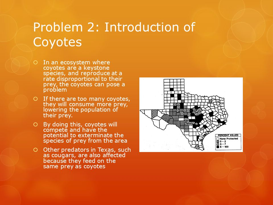 Problem 2: Introduction of Coyotes  In an ecosystem where coyotes are a keystone species, and reproduce at a rate disproportional to their prey, the coyotes can pose a problem  If there are too many coyotes, they will consume more prey, lowering the population of their prey.