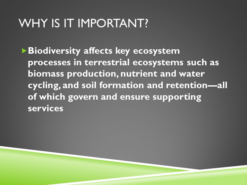 WHY IS IT IMPORTANT?  Biodiversity affects key ecosystem processes in terrestrial ecosystems such as biomass production, nutrient and water cycling,