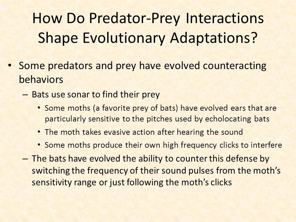 How Do Predator-Prey Interactions Shape Evolutionary Adaptations? Some predators and prey have evolved counteracting behaviors – Bats use sonar to fin