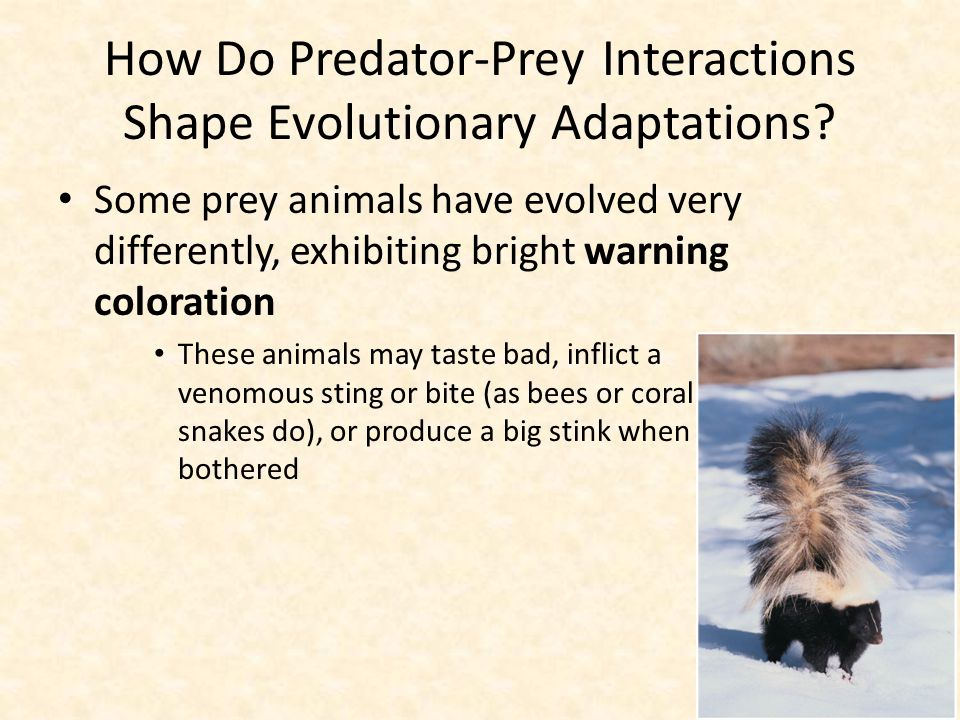 How Do Predator-Prey Interactions Shape Evolutionary Adaptations? Some prey animals have evolved very differently, exhibiting bright warning coloratio