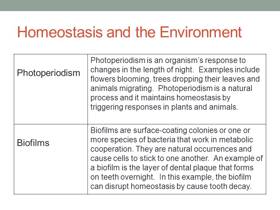 Homeostasis and the Environment Photoperiodism Photoperiodism is an organism's response to changes in the length of night.