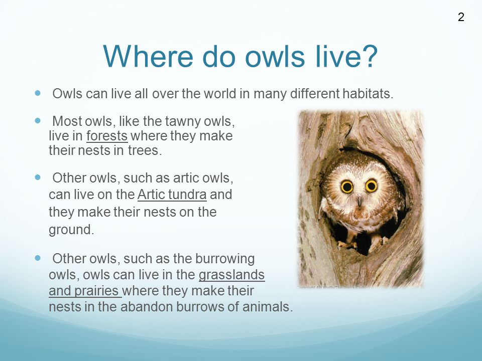 Where do owls live? Owls can live all over the world in many different habitats. Most owls, like the tawny owls, live in forests where they make their
