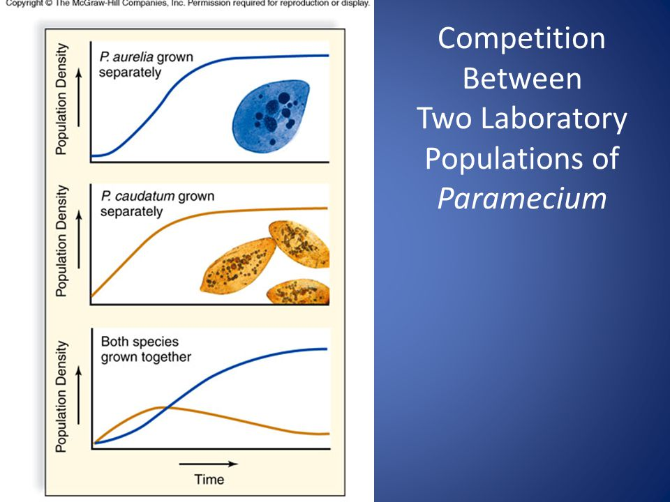 12 Competition Between Two Laboratory Populations of Paramecium
