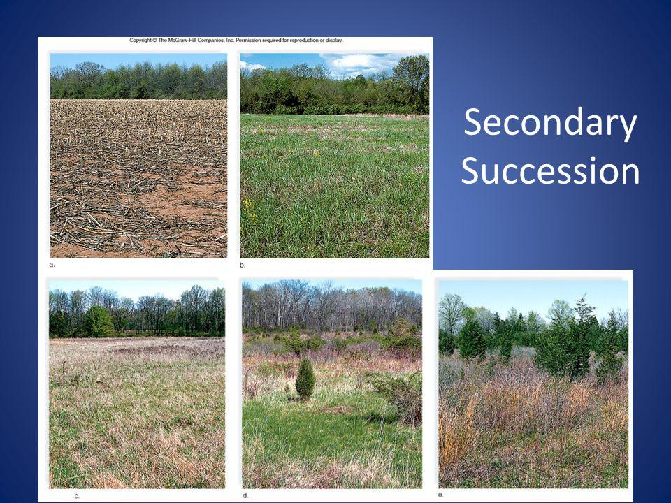 32 Secondary Succession