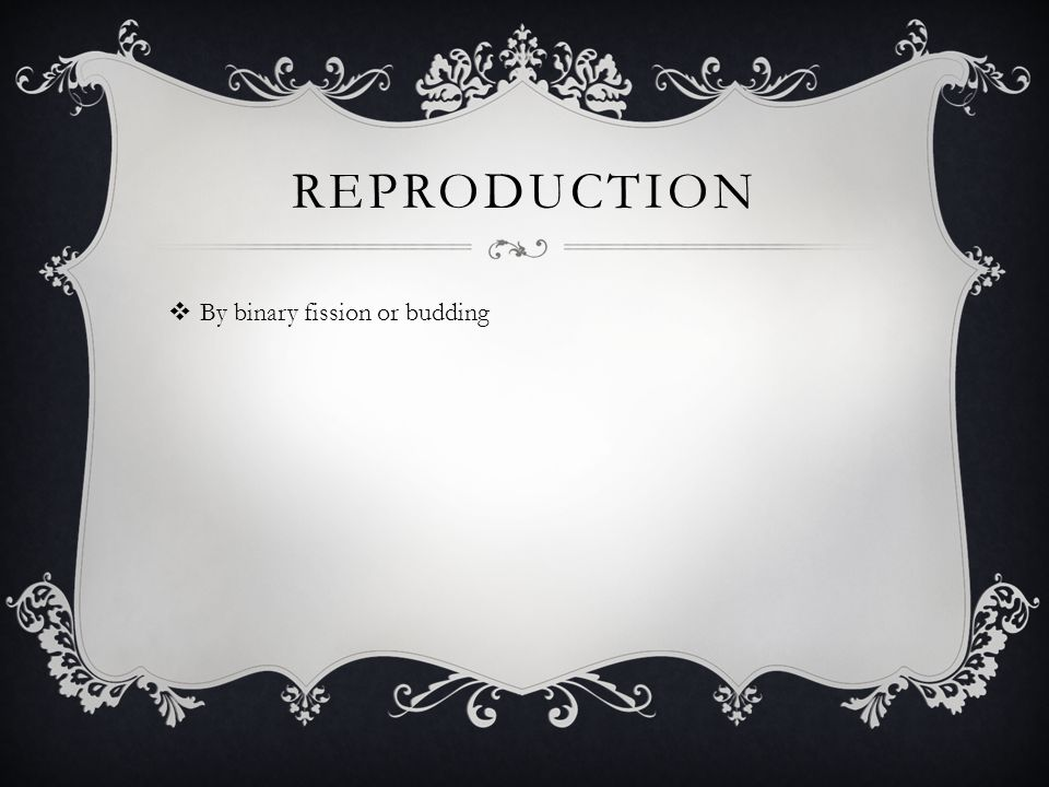REPRODUCTION  By binary fission or budding