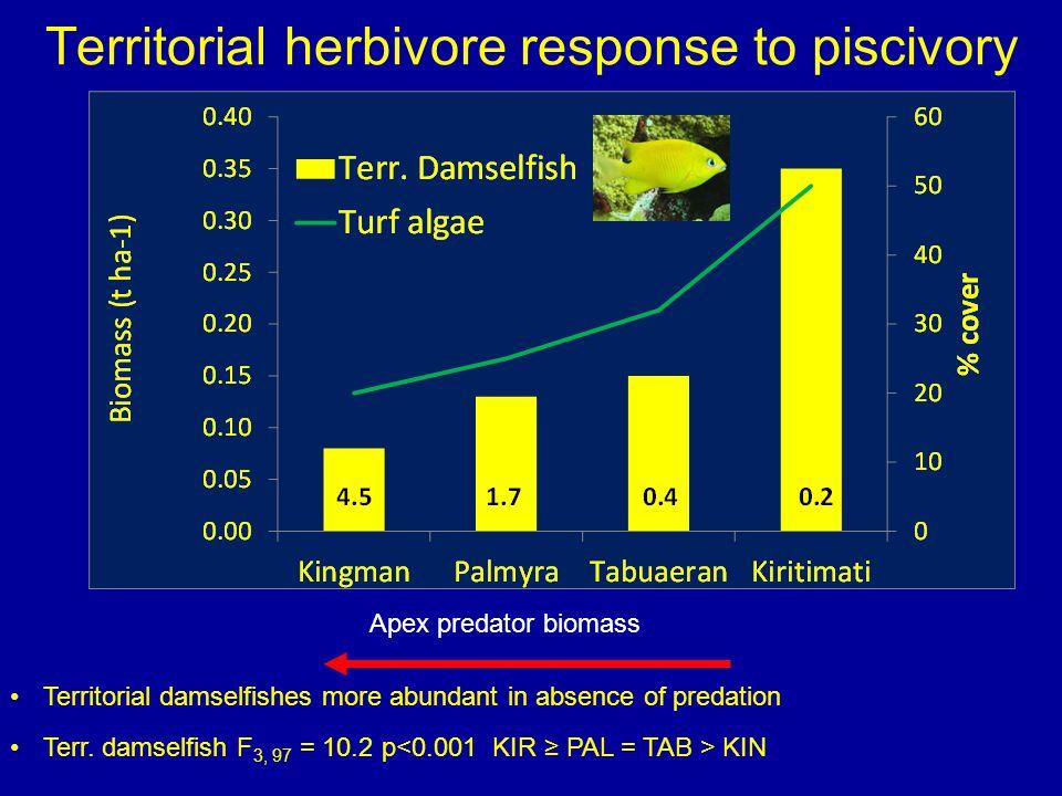 Territorial herbivore response to piscivory Apex predator biomass Territorial damselfishes more abundant in absence of predation Terr.