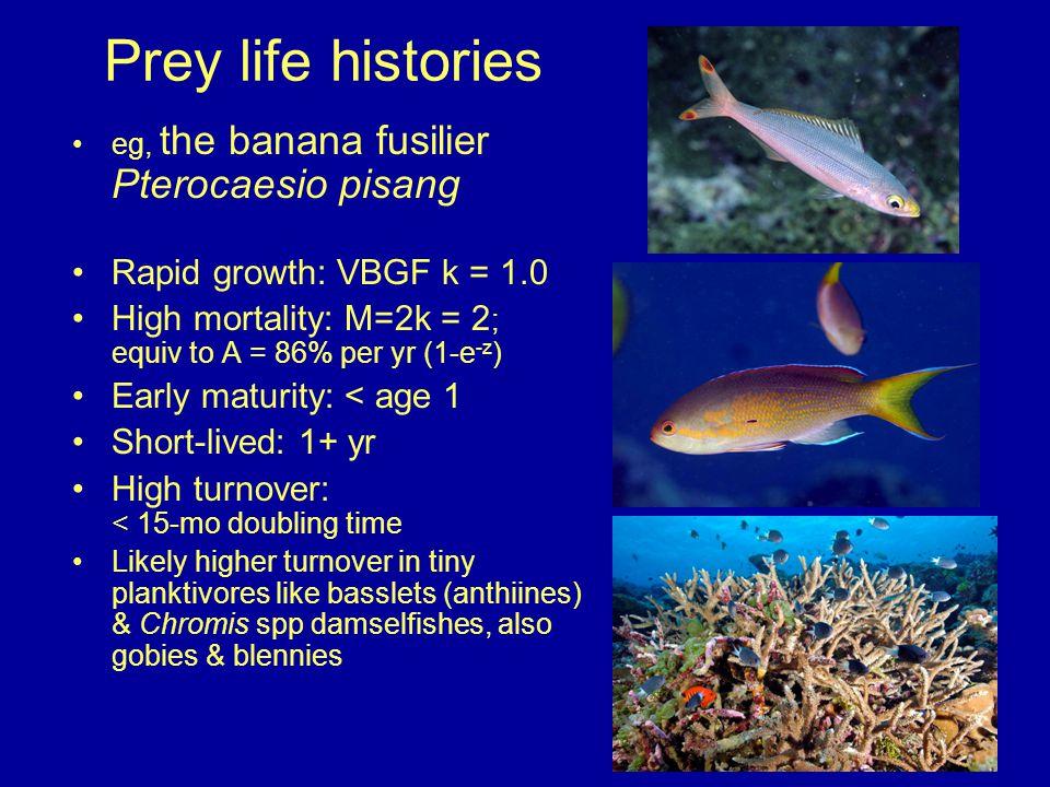 Prey life histories eg, the banana fusilier Pterocaesio pisang Rapid growth: VBGF k = 1.0 High mortality: M=2k = 2 ; equiv to A = 86% per yr (1-e -z )