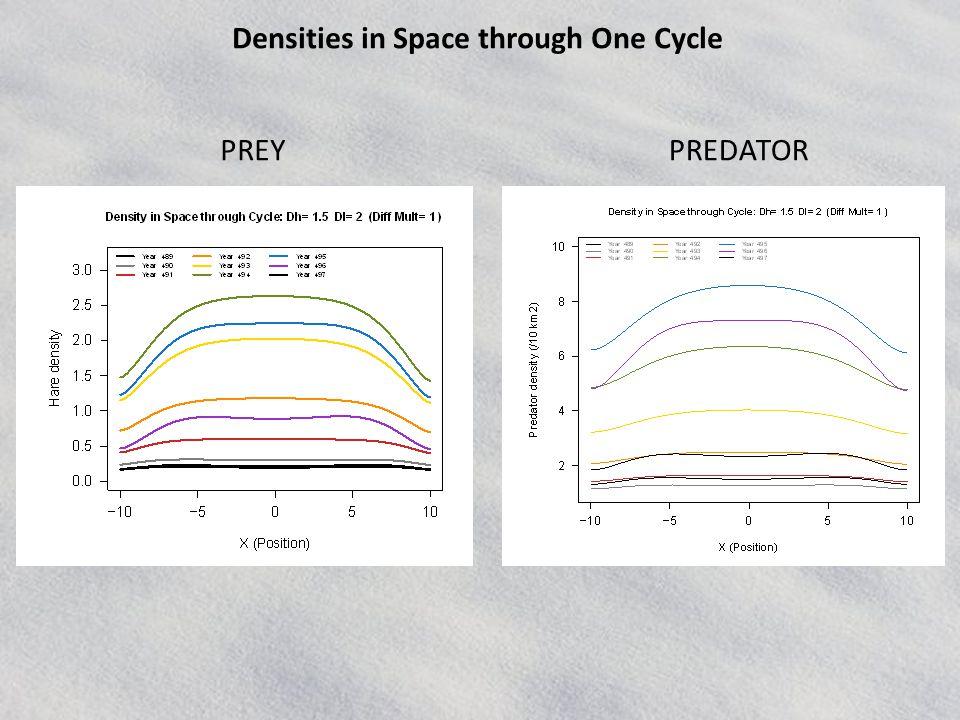 PREYPREDATOR Densities in Space through One Cycle