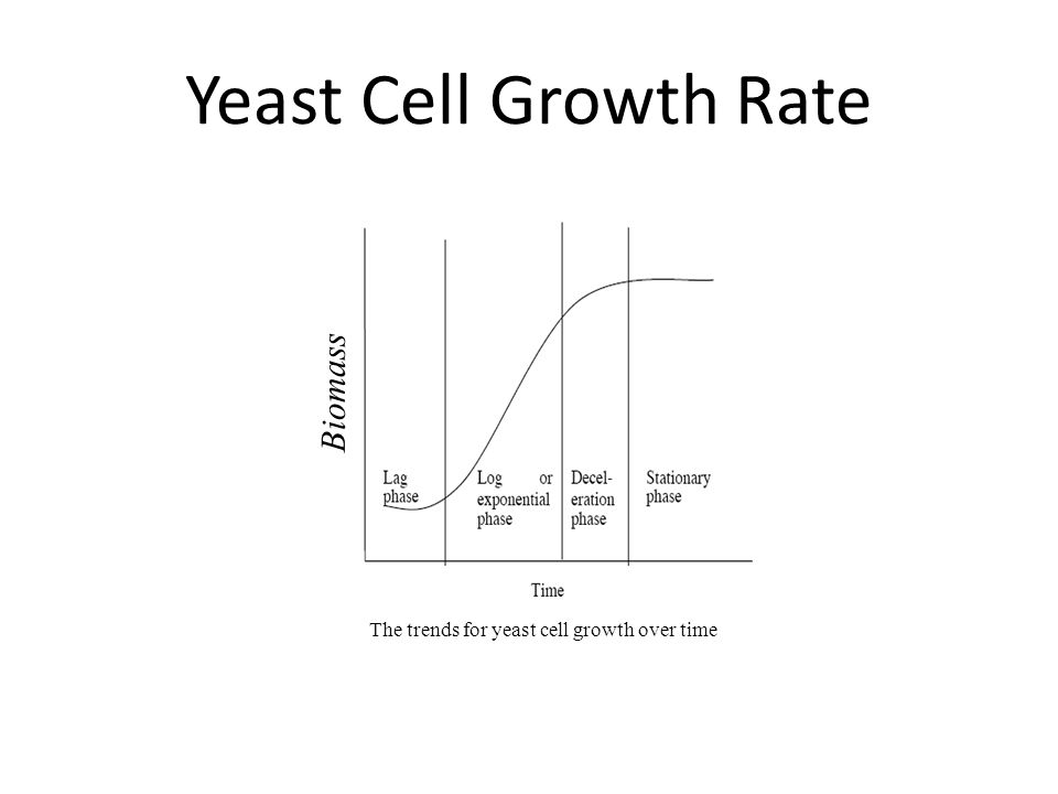 Biomass The trends for yeast cell growth over time Yeast Cell Growth Rate