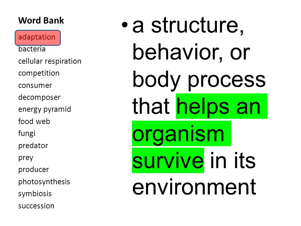 Word Bank a structure, behavior, or body process that helps an organism survive in its environment adaptation bacteria cellular respiration competition consumer decomposer energy pyramid food web fungi predator prey producer photosynthesis symbiosis succession