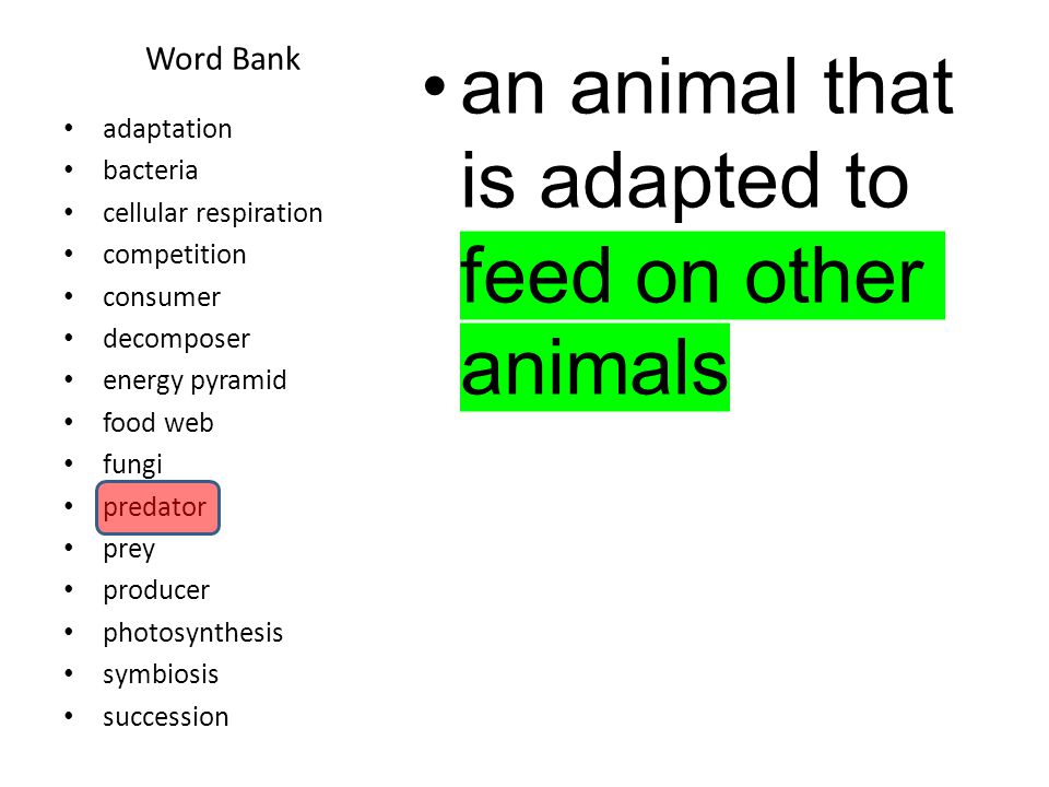 Word Bank the struggle among organisms to survive in a habitat with limited resources.