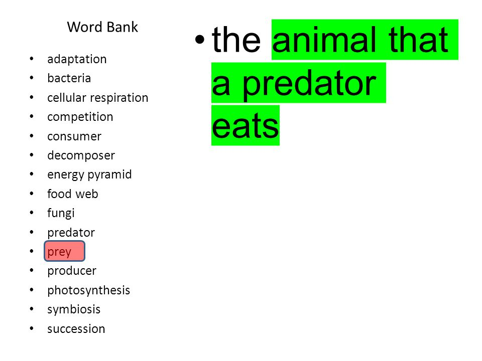 Word Bank the animal that a predator eats adaptation bacteria cellular respiration competition consumer decomposer energy pyramid food web fungi predator prey producer photosynthesis symbiosis succession