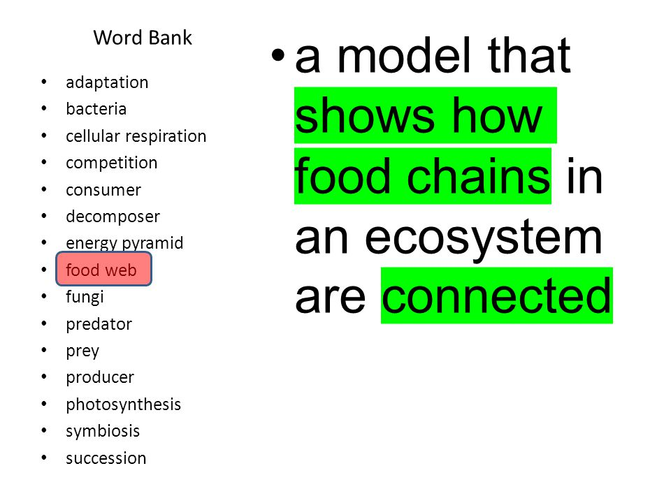 Word Bank a series of predictable changes that occur in an ecosystem over time.
