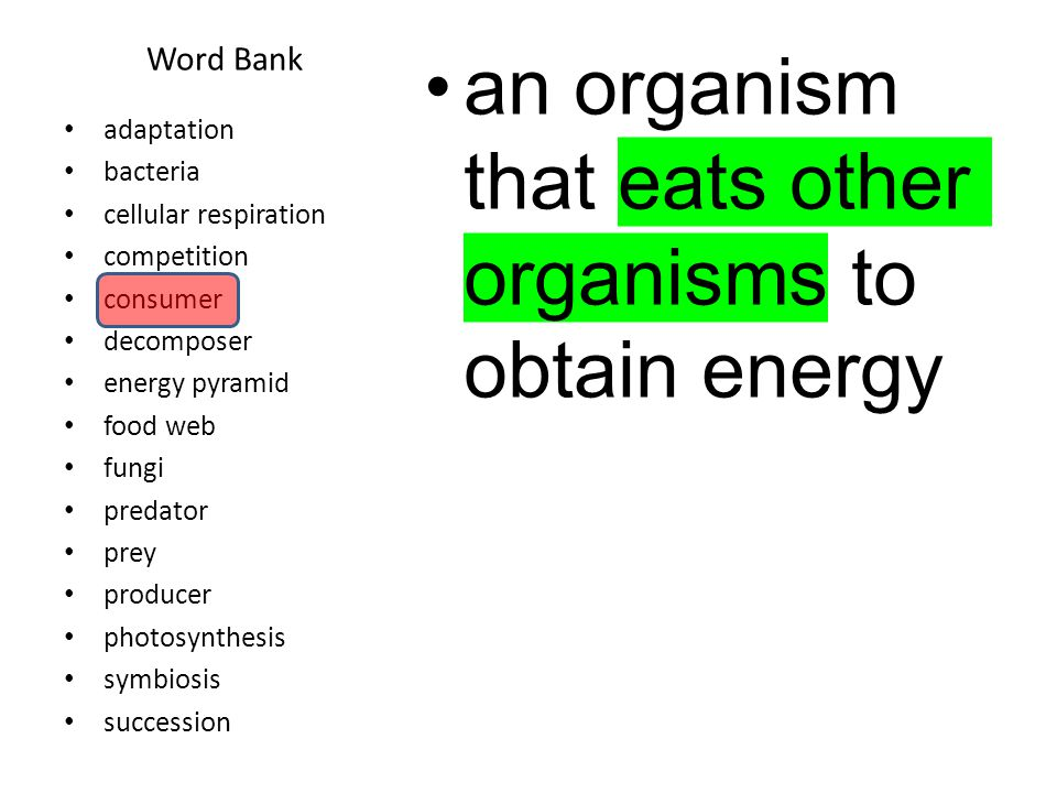 Word Bank An organism that breaks down dead organisms and returns materials to the environment adaptation bacteria cellular respiration competition consumer decomposer energy pyramid food web fungi predator prey producer photosynthesis symbiosis succession