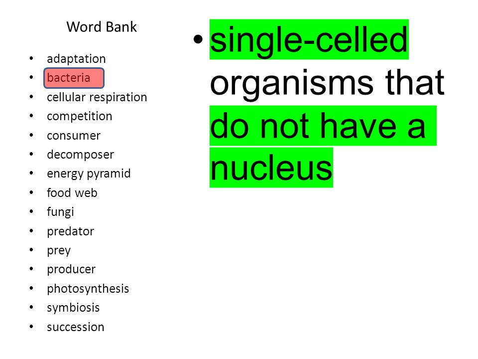 Word Bank members of a kingdom of mostly many- celled organisms, some of which break down other organisms; includes mushrooms, yeasts, and molds.