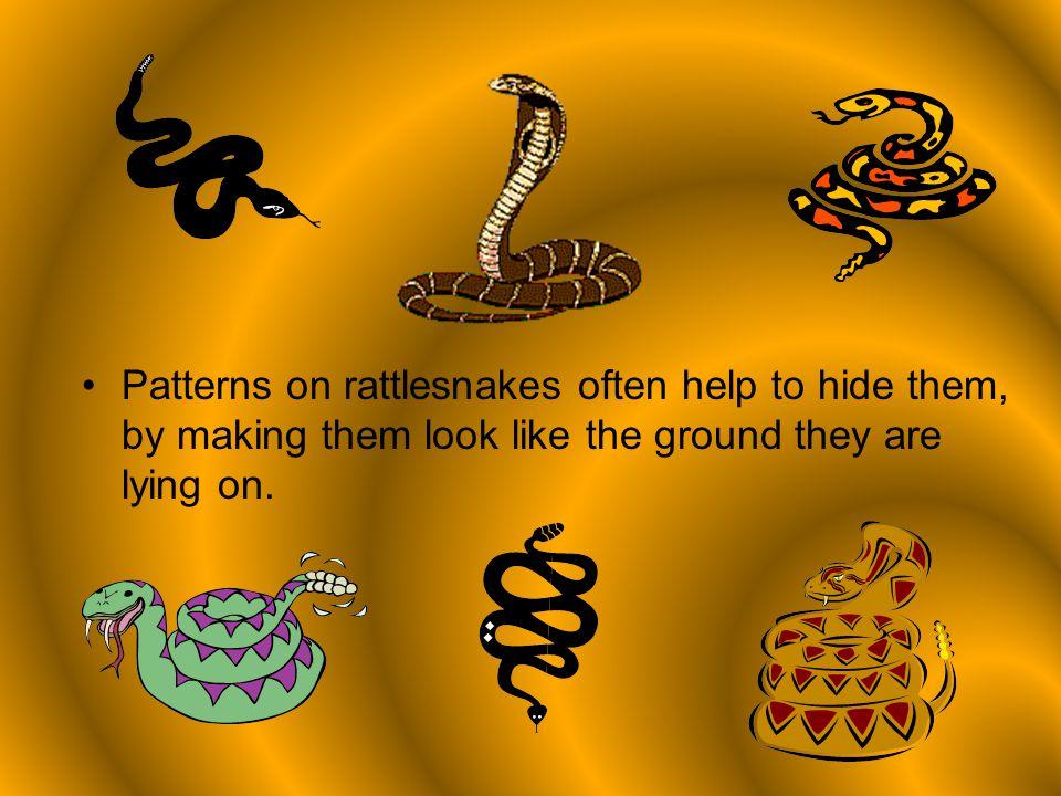Rattlesnakes By Nathan Argiro