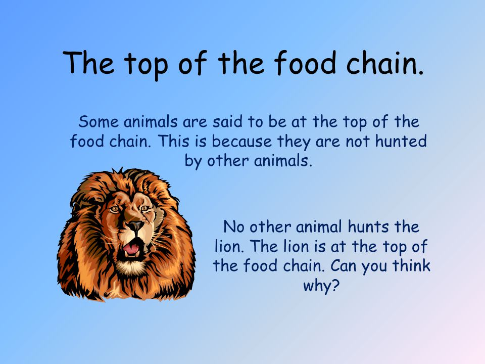 The top of the food chain. Some animals are said to be at the top of the food chain. This is because they are not hunted by other animals. No other an