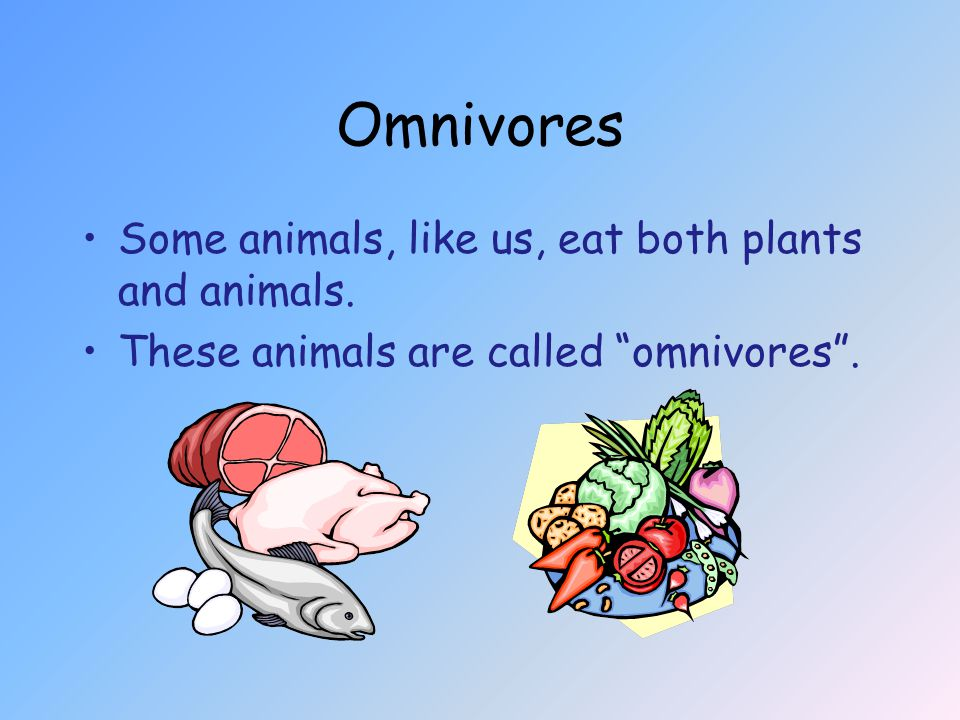 Omnivores Some animals, like us, eat both plants and animals. These animals are called omnivores .