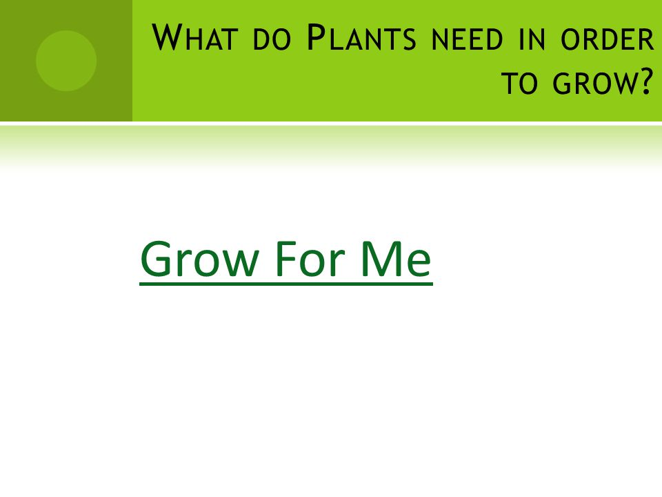 W HAT DO P LANTS NEED IN ORDER TO GROW ? Grow For Me