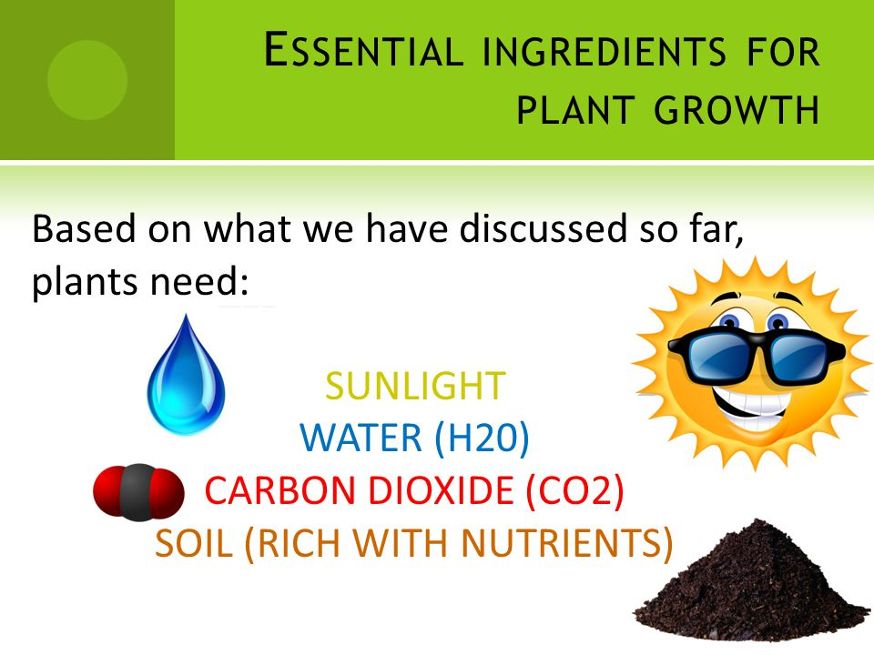 E SSENTIAL INGREDIENTS FOR PLANT GROWTH Based on what we have discussed so far, plants need: SUNLIGHT WATER (H20) CARBON DIOXIDE (CO2) SOIL (RICH WITH