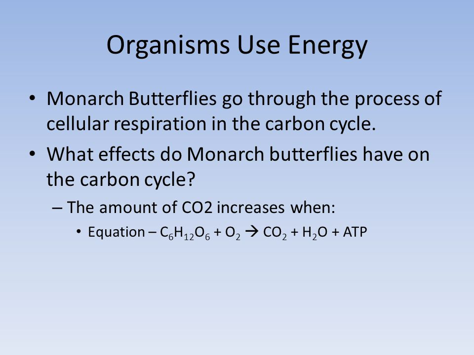 Organisms Use Energy Monarch Butterflies go through the process of cellular respiration in the carbon cycle.