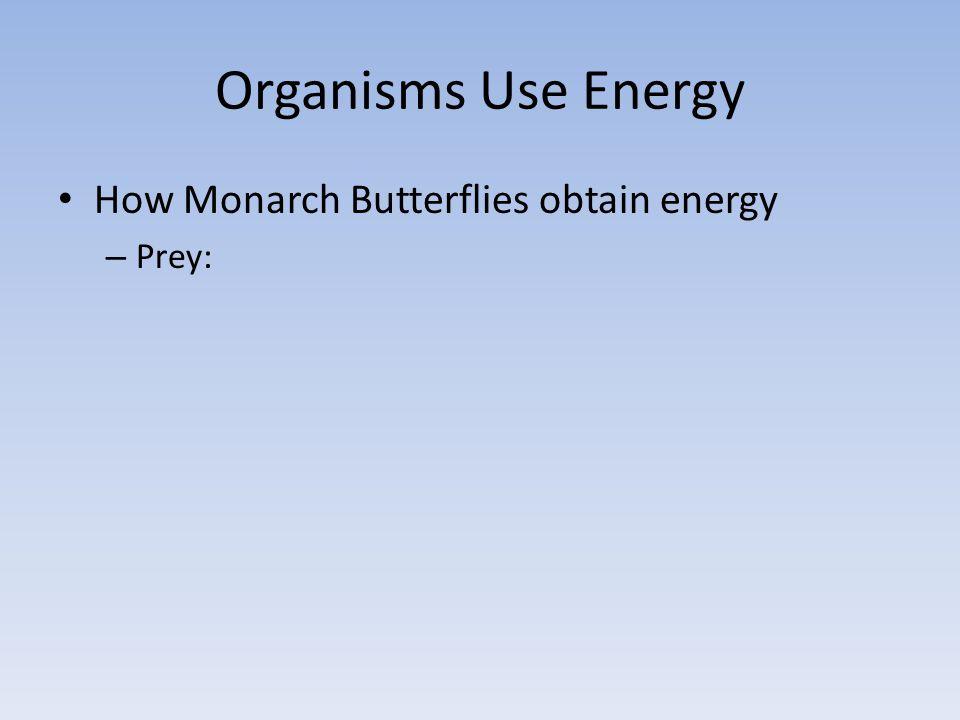 Organisms Use Energy How Monarch Butterflies obtain energy – Prey: