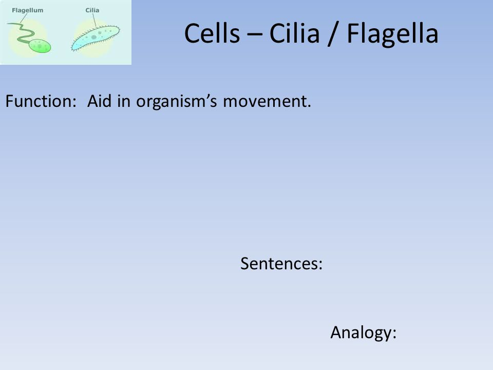 Function: Aid in organism's movement. Sentences: Analogy: Cells – Cilia / Flagella