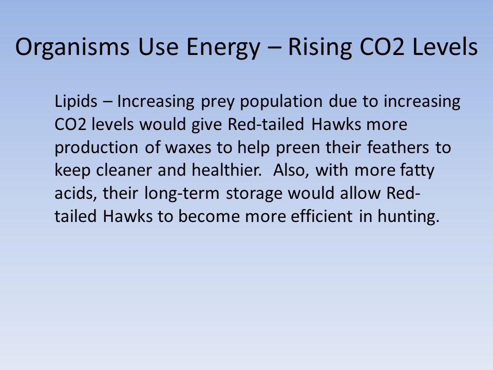Organisms Use Energy – Rising CO2 Levels Lipids – Increasing prey population due to increasing CO2 levels would give Red-tailed Hawks more production of waxes to help preen their feathers to keep cleaner and healthier.