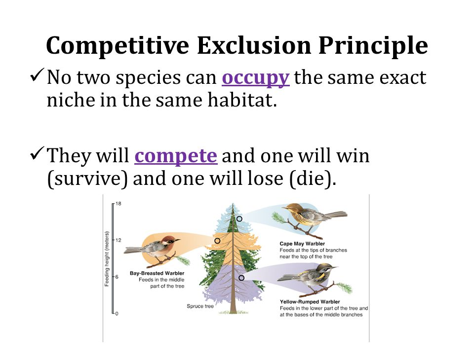 Competitive Exclusion Principle No two species can occupy the same exact niche in the same habitat.