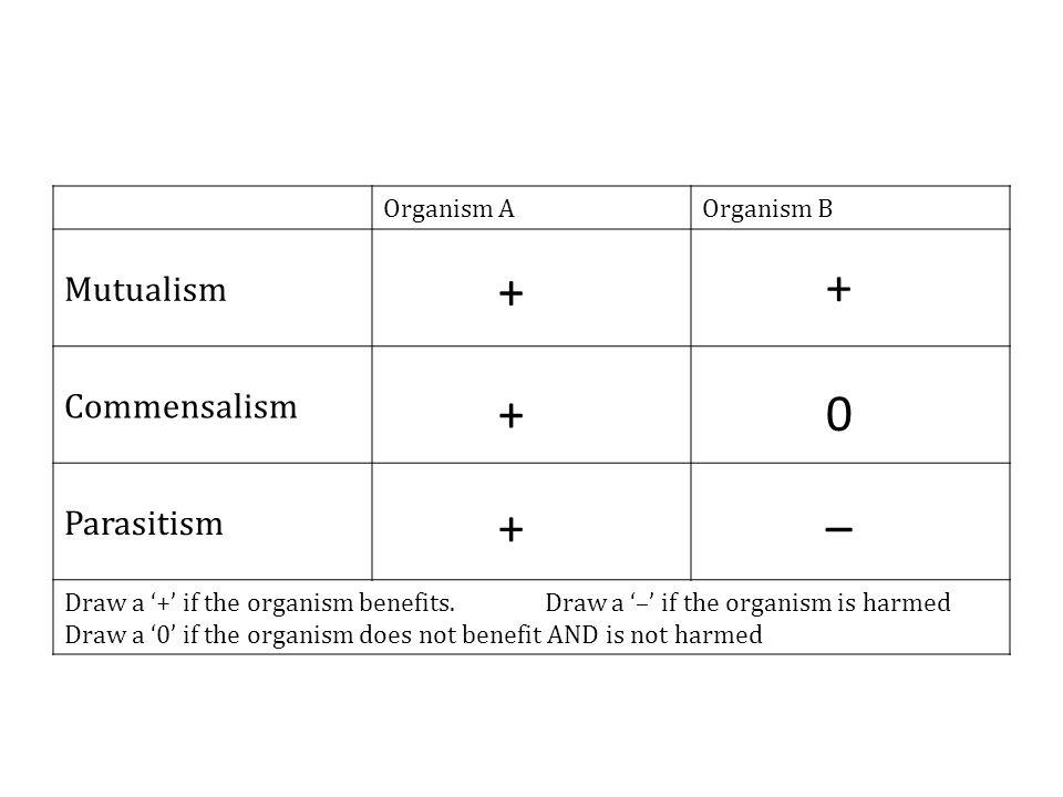 Organism AOrganism B Mutualism Commensalism Parasitism Draw a '+' if the organism benefits.