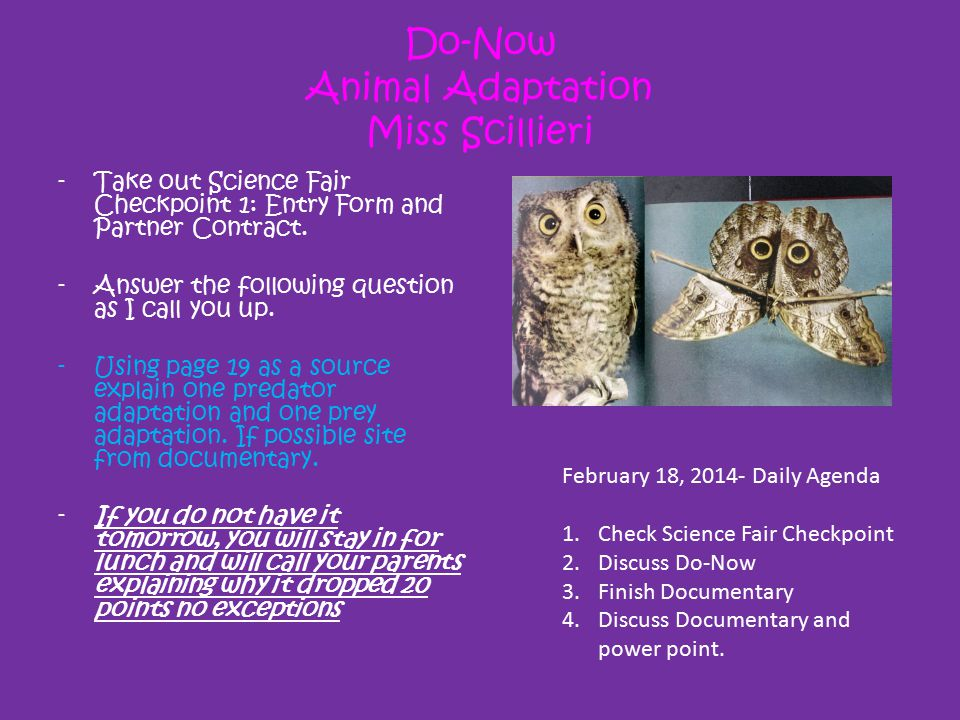 Do-Now Animal Adaptation Miss Scillieri -Take out Science Fair Checkpoint 1: Entry Form and Partner Contract. -Answer the following question as I call
