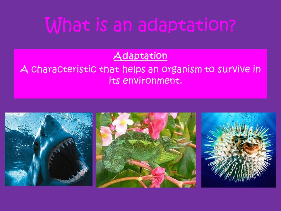 What is an adaptation? Adaptation A characteristic that helps an organism to survive in its environment.
