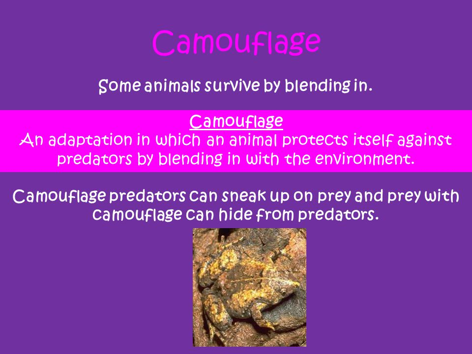 Camouflage Some animals survive by blending in. Camouflage predators can sneak up on prey and prey with camouflage can hide from predators. Camouflage