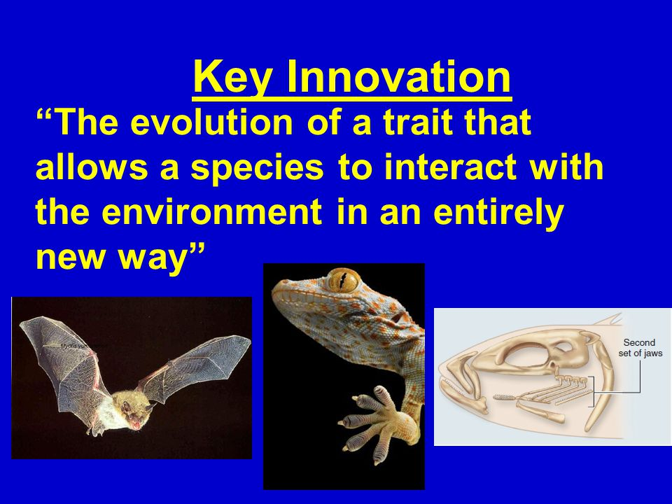 The evolution of a trait that allows a species to interact with the environment in an entirely new way Key Innovation