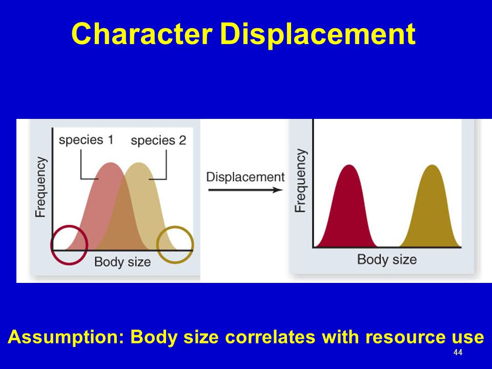 44 Character Displacement Assumption: Body size correlates with resource use
