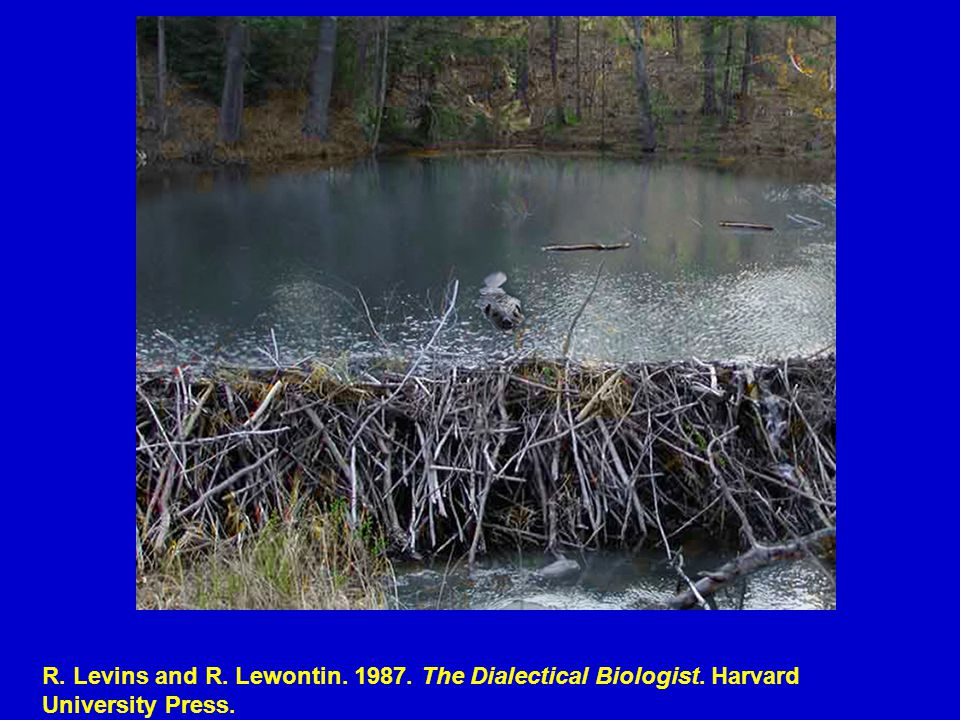 R. Levins and R. Lewontin. 1987. The Dialectical Biologist. Harvard University Press.