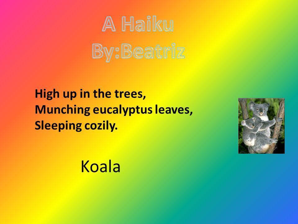 High up in the trees, Munching eucalyptus leaves, Sleeping cozily. Koala